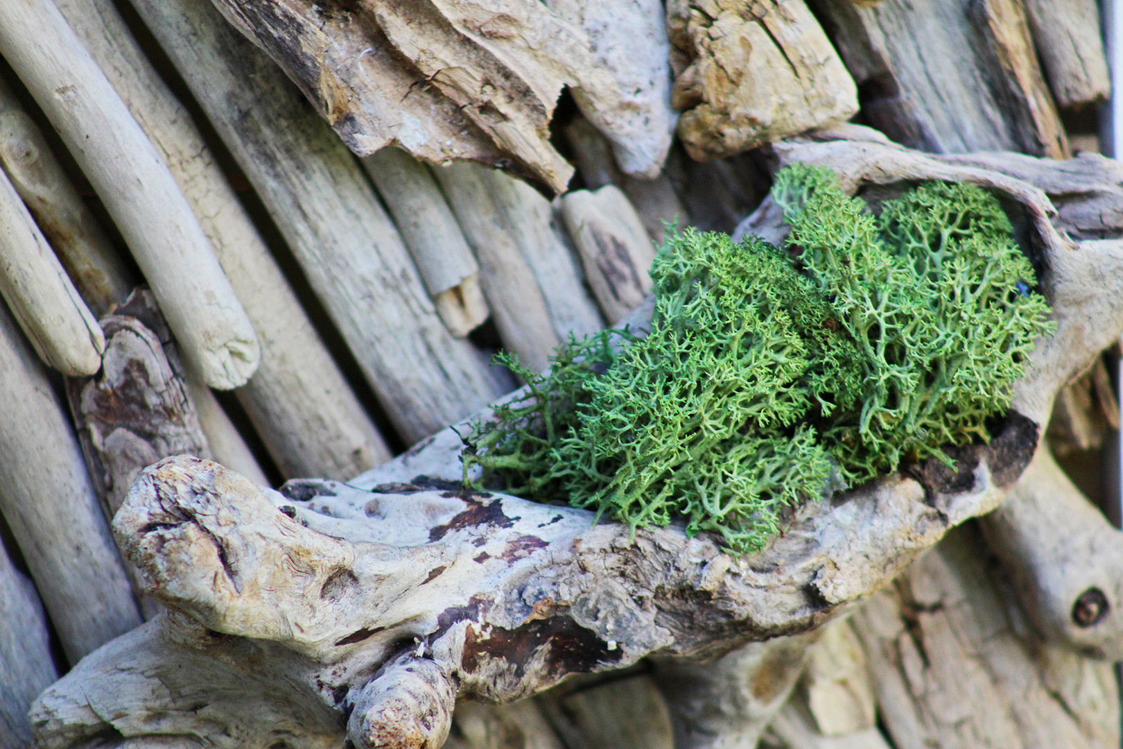 Detail steny z dreva