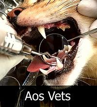 dentistavet05.jpg