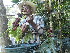 Guatemala%20-%20COMAL%20-%20Don%20Pedro.