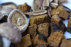 mushrooms-5817768_1920.jpg