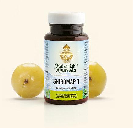 SHIROMAP 1