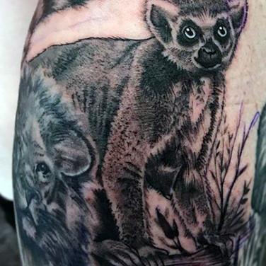 lemur-4.jpg