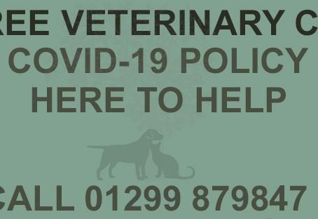 Covid - 19 Update - Book in your Puppy vaccine