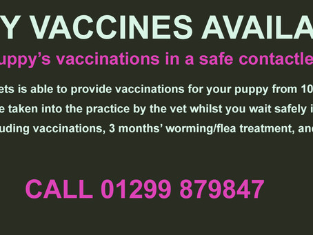Puppy Vaccines Available