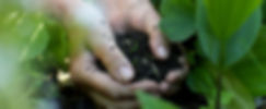 Photo of hands holding soil among green plants
