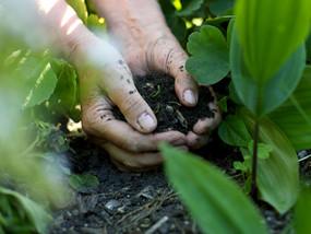 土壌中の手