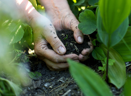 Let's Get Dirty: 5 Ways to let your soil thrive