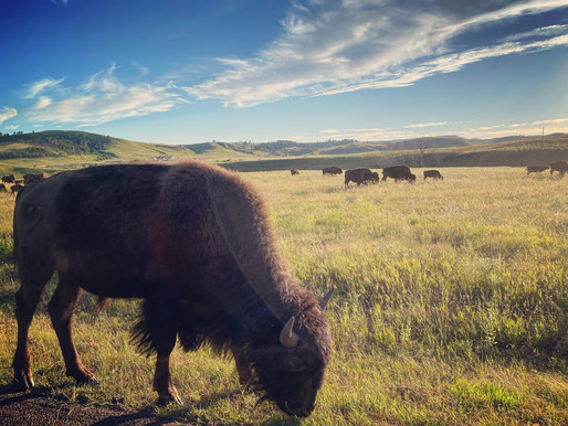 First stop in our west mountain road trip: The Black Hills, South Dakota