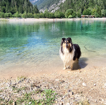 Gill at lake Jasna in the Slovenian Alps
