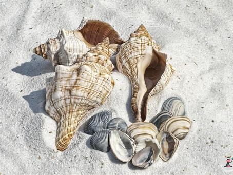 Γιατί Δεν Πρέπει Να Μαζεύουμε Κοχύλια Από Την Παραλία