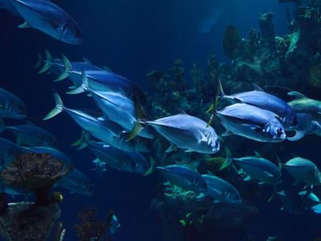 Ψάρια Μόλυνση και Κίνδυνοι για Υγεία,Φυτικά Ωμέγα 3