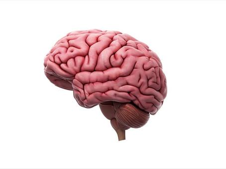 Βοήθησε το κρέας στην ανάπτυξη του εγκεφάλου μας;