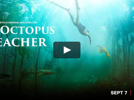 Τι μου έμαθε ένα Χταπόδι!My Octopus Teacher.Το νέο Ντοκιμαντέρ του Netflix θα σε κάνει να κλάψεις!