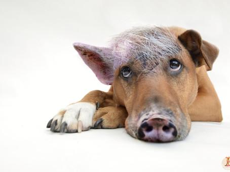 Σίγουρα Αγαπάς Τα Ζώα;Τι Είναι ο Σπισισμός;