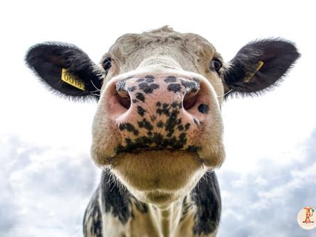 10 πράγματα που πρέπει να γνωρίζετε για τη βιομηχανία τροφίμων.