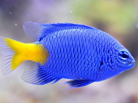Ψάρια Συναισθανόμενα όντα,Υπεραλίευση,Παραμπίπτοντα αλιεύματα.