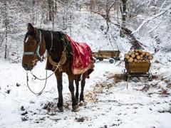 Tapshanov - Macedonia Photography