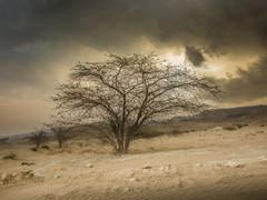 Tapshanov - Chahkooh valley, Iran