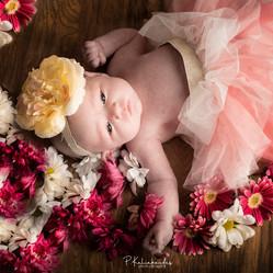 upload newborn photoshoot-052.jpg