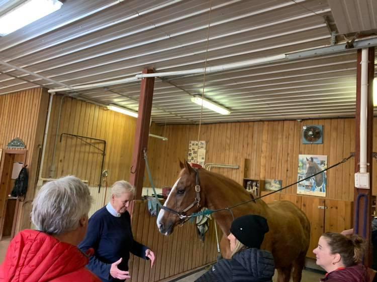 PEI Canada Dalvay Yoga Retreat Horse Connection Program