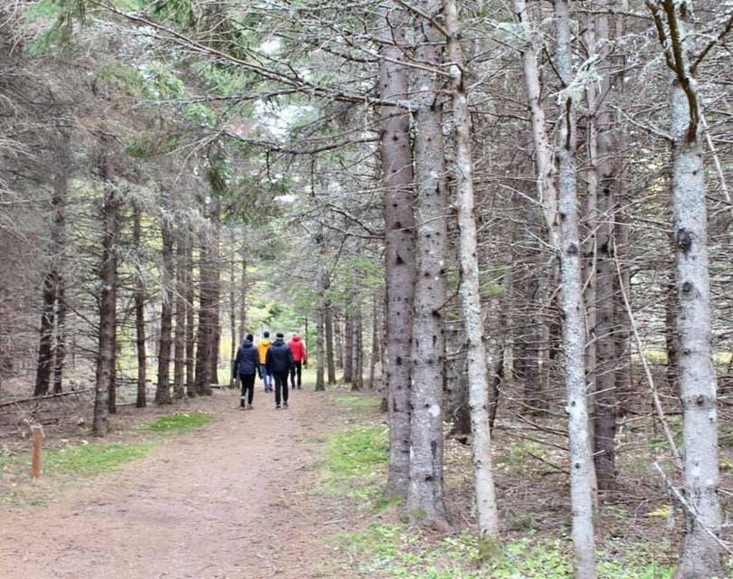 PEI Canada Dalvay Yoga Retreat Walk in the Woods