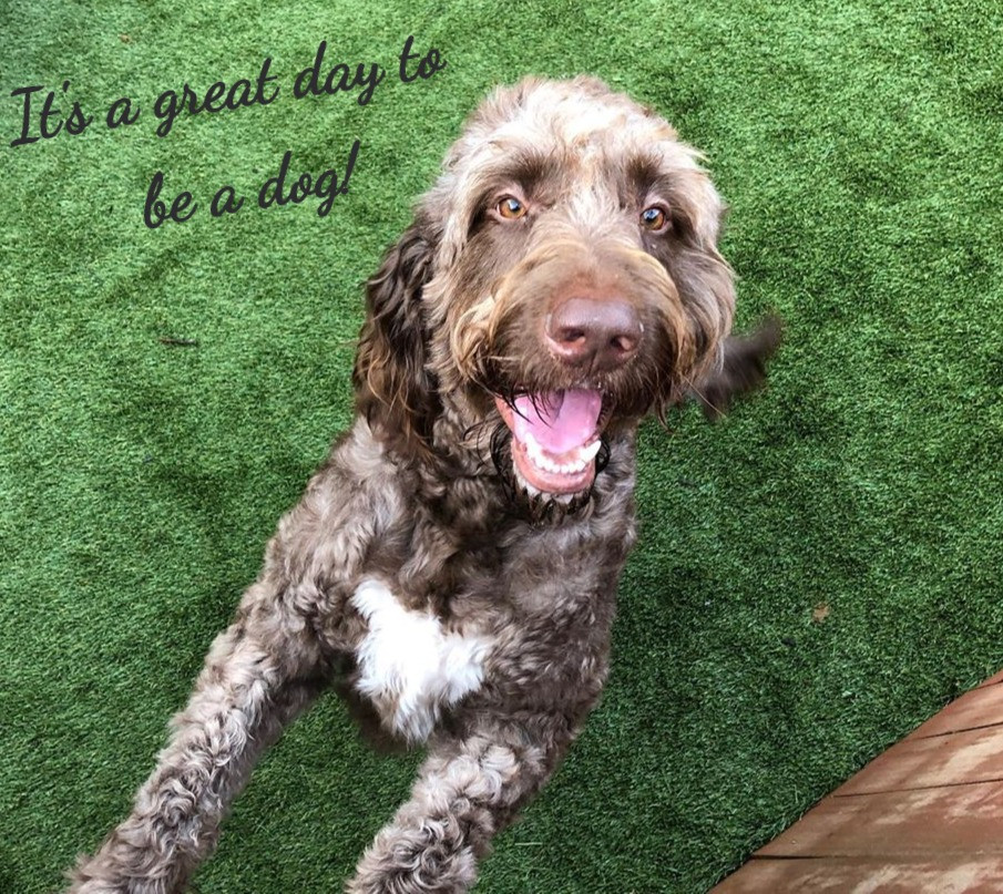 """One of our happy daycare goers """"cheezin"""" for the camera!"""