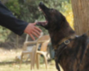 Dog-Aggression-resized-600x480.jpg