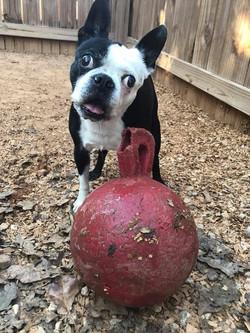 ball lovin