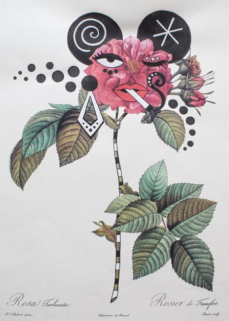 flowerfaces-4_baixa.jpg