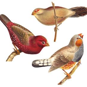 Listen To Birdsong