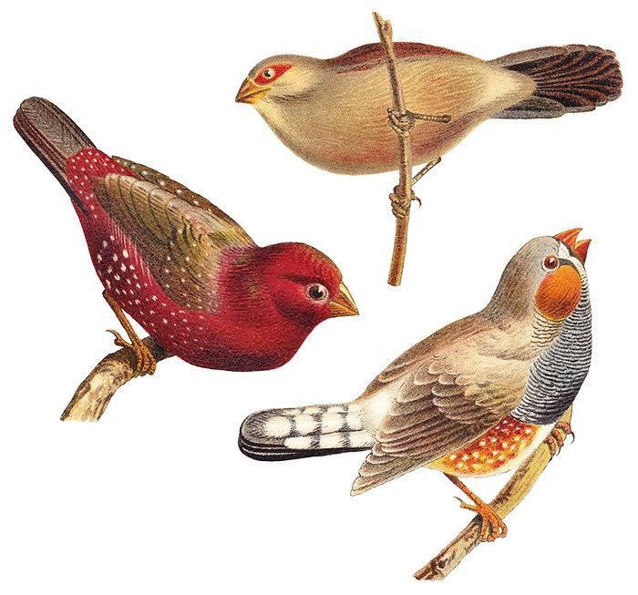 Os pássaros cor de água