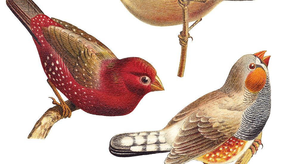 Early Bird förköp