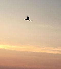Cigogne du soir #touraine #cigogne #couc