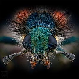 Insekt_Thorben.jpg