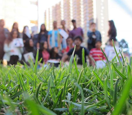 8b-grass-1024x765.jpg
