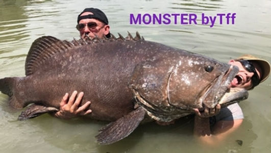 Giant Goliath Grouper / Pla Gow /catch by Thailand-Fishing.
