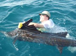 Sailfish-Action-Fishing
