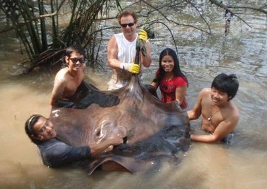 Freshwater Stingray / Pla Kang Nam Djut / Himantura Chaophraya / catch by Thailand-Fishing.Thailand-Fishing