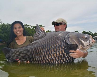 Beautiful Giant Siam Carp