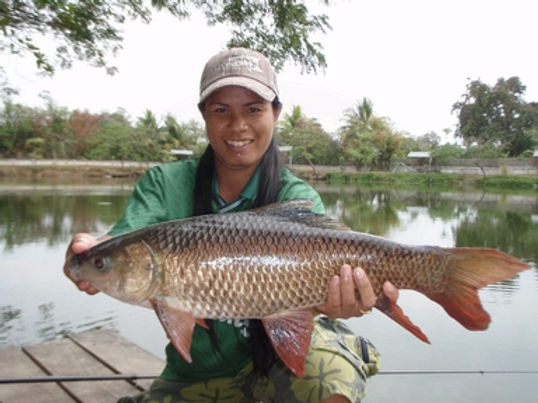 Rohu / Indian Carp / Pla Yissok / Labeo Rohita / catch by Thailand-Fishing.