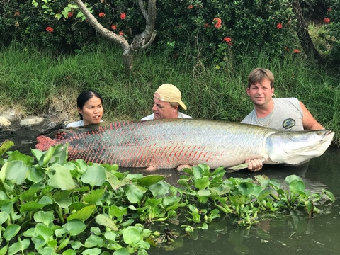 Monster Arapaima thailand-fishing.