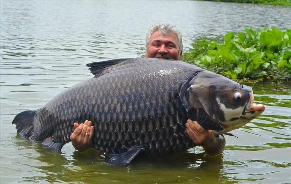 Catch Big Carp mit thailand-fishing.