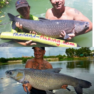 Chinese Black Carp catch by Thailand-Fishing.