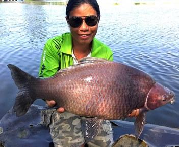Black Sharkminnow catch by Thailand-Fishing.