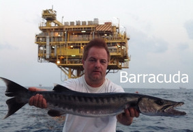 Barracuda catch on gas and oil platforms at Ocean Fishing Pattaya.