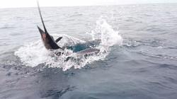 Sailfish Action Fishing.
