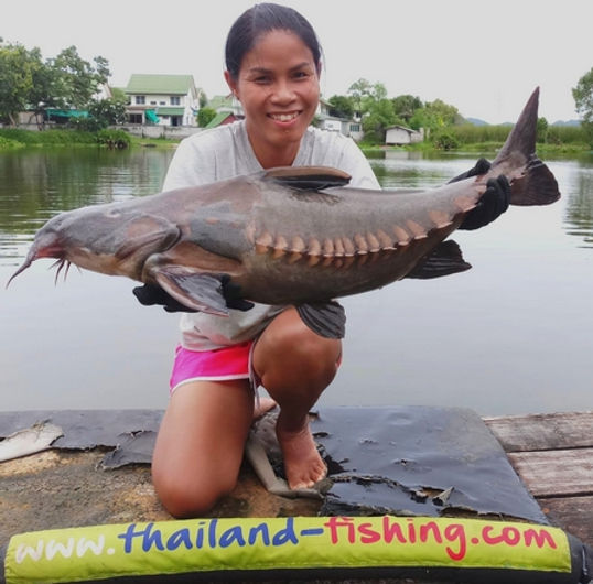 Ripsaw Catfish / Niger Catfish / Pla Razorback / Oxydoras Niger / catch by Thailand-Fishing.