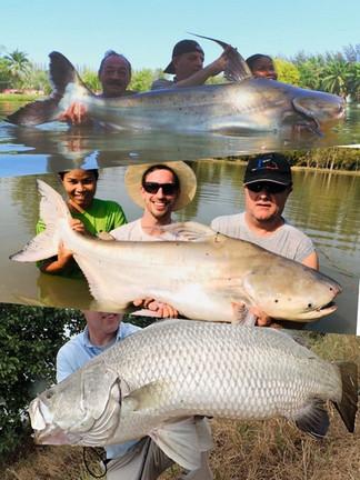 Catch the biggest Fish