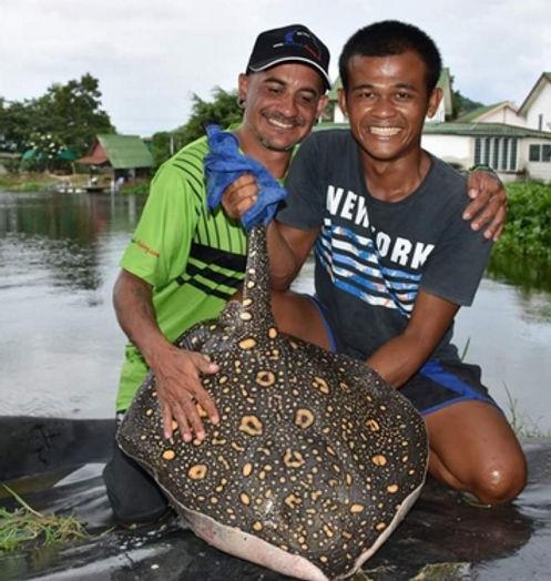 Motoro Stingray / Pla kaben /  Potamotrygon Motoro catch by Thailand - Fishing