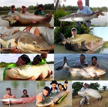Thailand-Fishing Arapaima